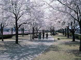 Arakawa Sakura-Zutsumi Park