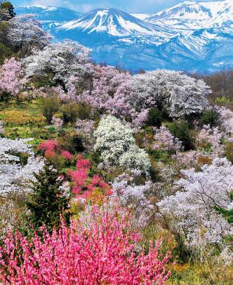 花見山とは