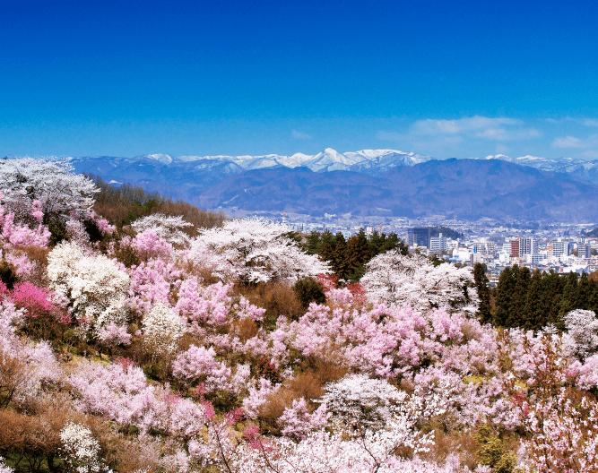 咲き誇る花々の間から福島市街地の風景が広がる