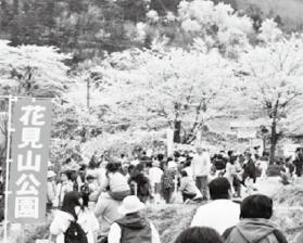 毎年多くの観光客が訪れる花見山公園